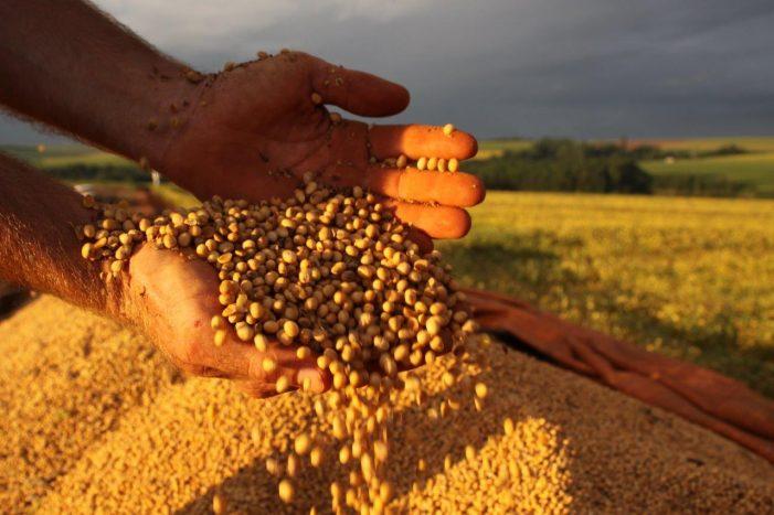 Safra agrícola de 2013 faz a lição de casa