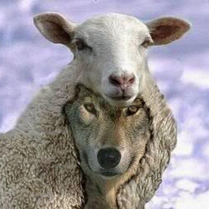 Não tratemos os lobos como ovelhas perdidas