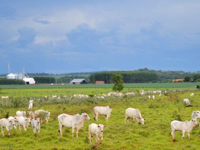AGROPECUÁRIA: o maior saldo comercial da história, apesar do governo