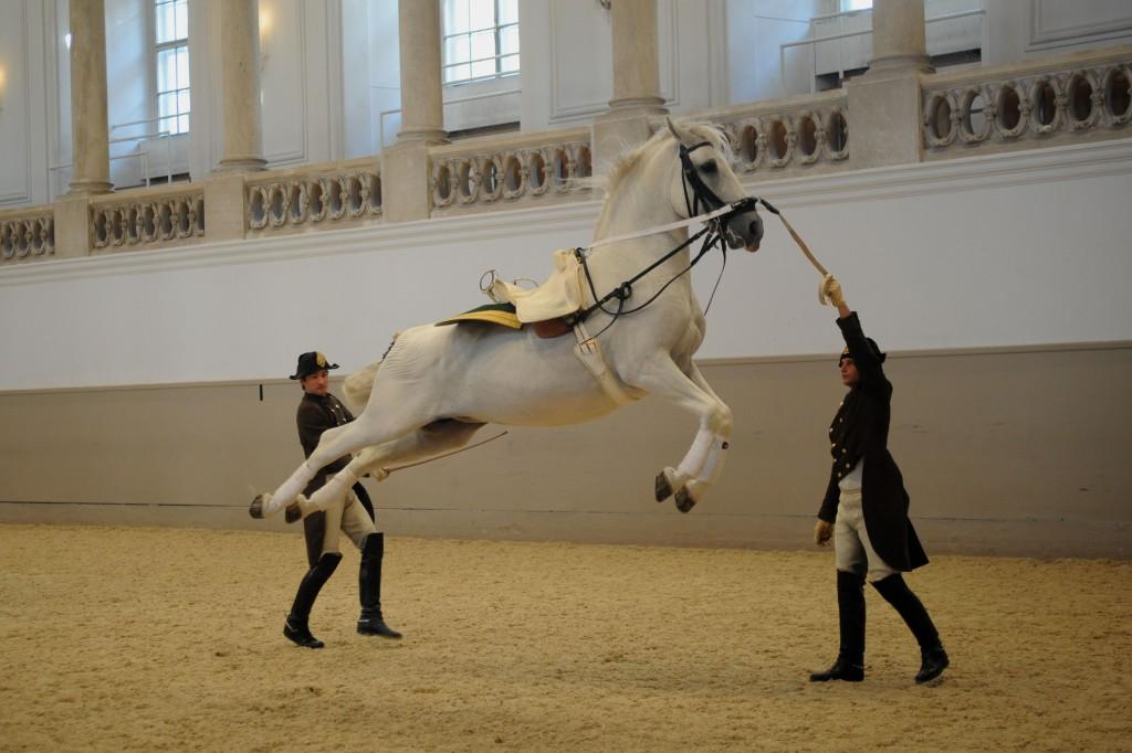Cavalos 4
