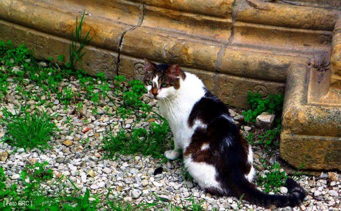 Simpático ou detestável, o curioso bicho chamado gato