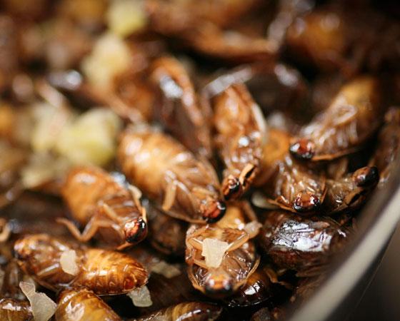 Ecologistas radicais oferecem farinha de… baratas!