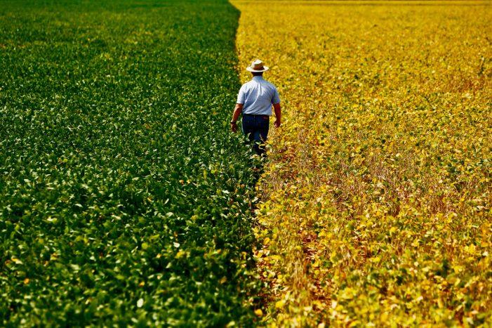 Ameaças ao avanço da safra agropecuária