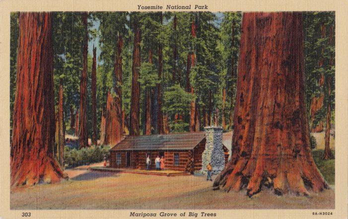 Sequoias, ecologia e os Evangelhos