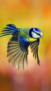 """""""Olhai as aves do céu: não semeiam nem ceifam, nem recolhem nos celeiros, e vosso Pai celeste as alimenta. Considerai como crescem os lírios do campo: não trabalham nem fiam. Entretanto eu vos digo que o próprio Salomão, no auge de sua glória, não se vestiu como um deles"""" (Mat 6, 26-30)."""