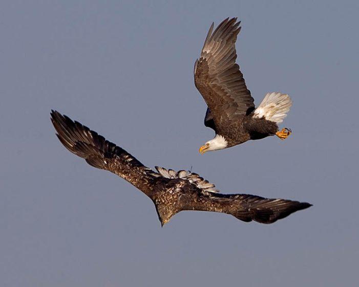 A águia e a promessa de Fátima