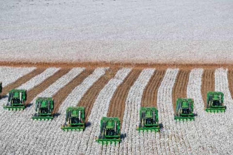 Colheita de algodão em Campo Novo do Parecis (MT)