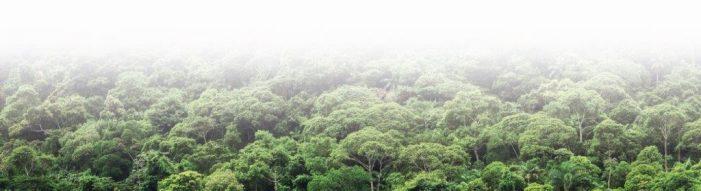 Amazônia é nossa, graças a Deus