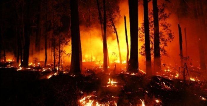 A verdade sobre os incêndios e queimadas